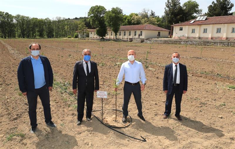 Amasya'da Çilek Üretimi Yaygınlaştırılıyor