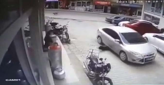 Köpeği Ezen Cani Sürücü Cezayı Yedi