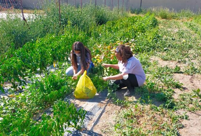 Çocuklarımız Meyve ve Sebzelerini Kendileri Yetiştiriyor...
