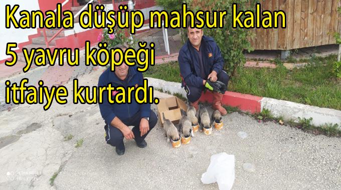 Kanala düşen ve mahsur kalan 5 yavru köpeği itfaiye kurtardı