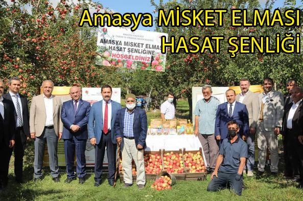 Amasya'da Elma Hasadı Başladı