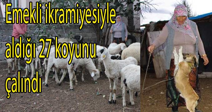Emekli ikramiyesiyle aldığı 27 koyunu çalındı