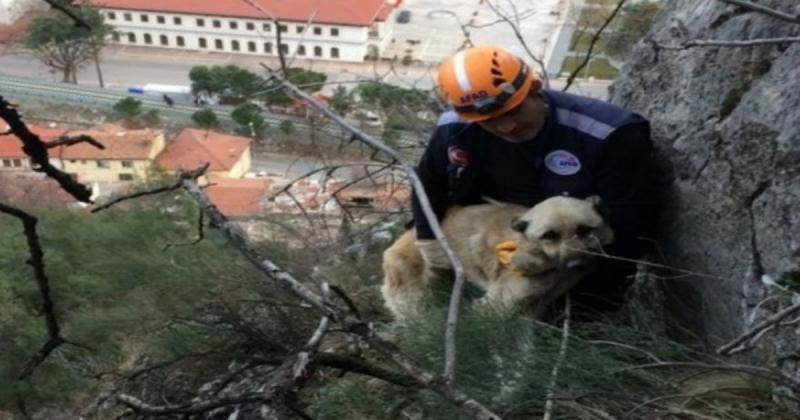 Mahsur Kalan Köpeği AFAD Kurtardı