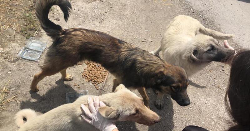 Amasya CHP, Sokak Hayvanlarını Unutmadı