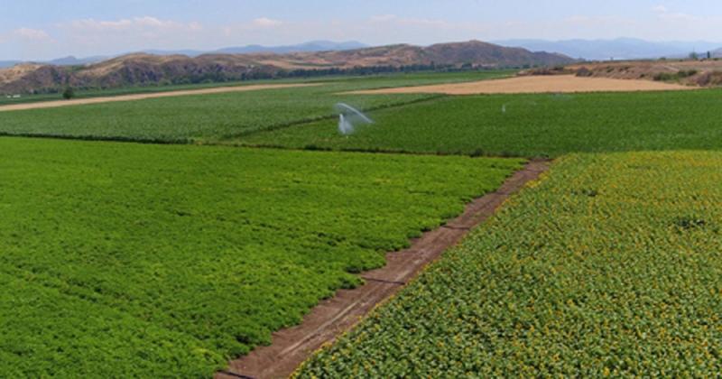 Amasya'da 2020 Yılında 306.159 Dekar Tarım Arazisi Sulandı