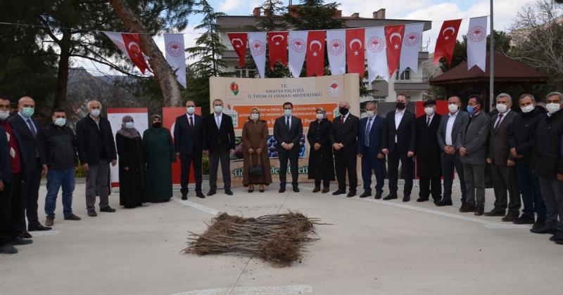 Amasya'da 3750 Adet İncir Fidanı Çiftçilere Dağıtıldı