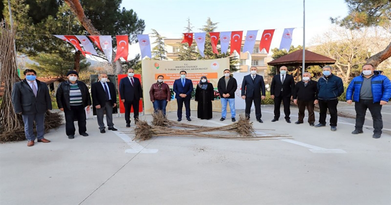 Amasya'da Kiraz Fidanı Dağıtım Töreni Yapıldı