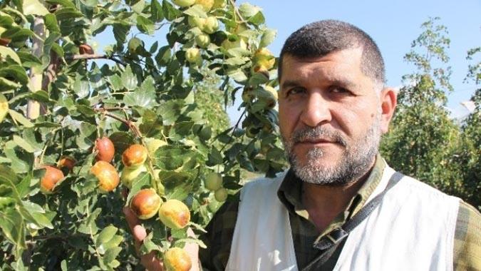 Elma Bahçelerini Söküp Rüyasında Gördüğü Hünnapı Dikti