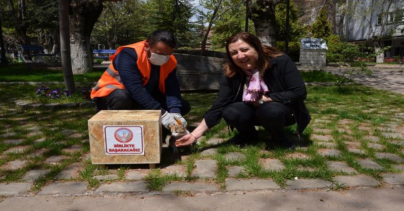 Gümüşhacıköy Belediyesi Sokak Hayvanlarını Unutmuyor