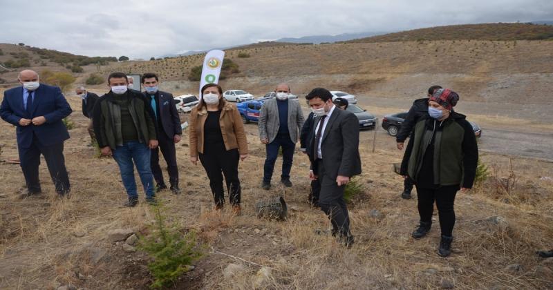 Gümüşhacıköy'de 'Milli Ağaçlandırma Günü' Etkinliği Gerçekleştirildi