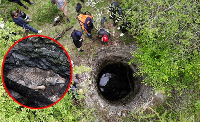 Kuyuya düşen kurt itfaiye ekipleri tarafından kurtarıldı