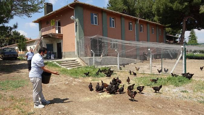 Lisenin tavuklarını öğretmenler besliyor