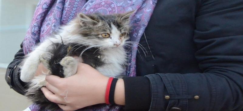 Minik Kedi İçin Seferberlik