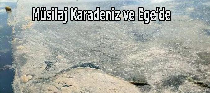 Müsilaj Karadeniz ve Ege'de