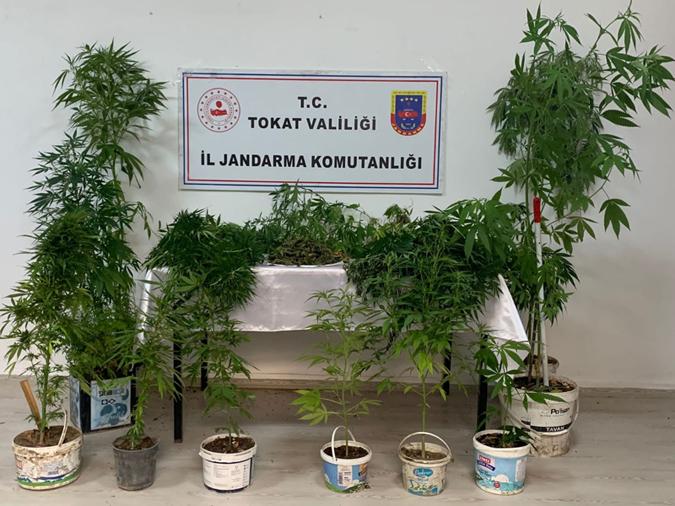 Saksıda Uyuşturucu Yetiştiren 3 kişi Gözaltına Alındı
