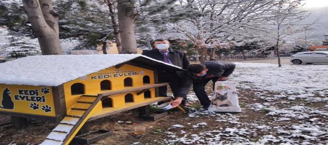 Şehrin 35 Noktasına Mama ve Yem Bırakıldı