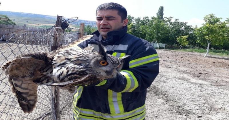 Tele Takılan Kuşu İtfaiye Ekipleri Kurtardı