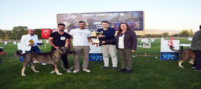 Türk Çoban, Av ve Bekçi Köpekleri Yarıştı