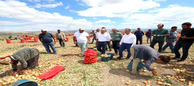 Vali Varol Oluz Köyündeki Soğan Hasadı Yapılan Arazilerde İncelemelerde Bulundu