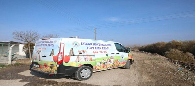 Yaralı Sokak Köpeklerinin İmdadına Suluova Belediyesi Yetişti