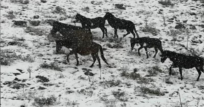 Yılkı Atlarını Görüntülediler