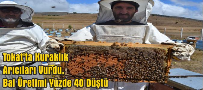 Kuraklık Arıcıları Vurdu, Bal Üretimi Yüzde 40 Düştü